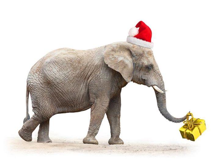 ladies white elephant christmas party at new harmony baptist church tyler - White Elephant Christmas Party