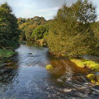 River Tame Walk