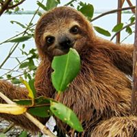 Meet a Sloth Owen Sound - Diversity of Living Things
