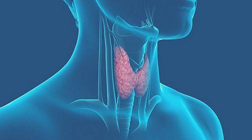 Ecografia della tiroide paratiroidi e patologie del collo