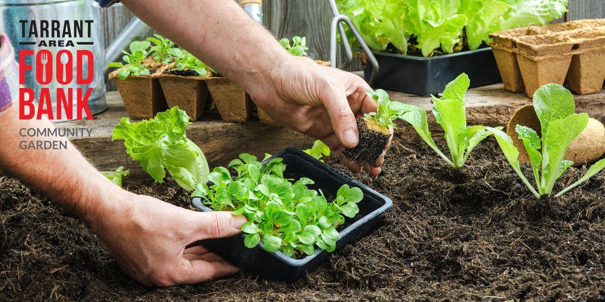 Planning Your Spring & Summer Garden