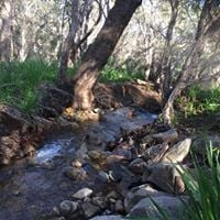 Half Day Hike - Whistlepipe Gully and Lewis Rd