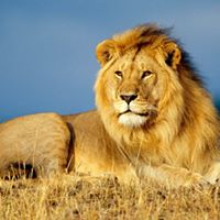 Southern Africa Guided Tour