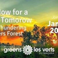 Act Now For a Green Tomorrow Save Thundering Waters Forest