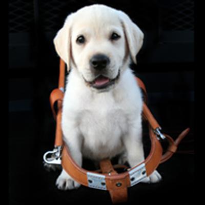 OccuPaws Guide Dog Association