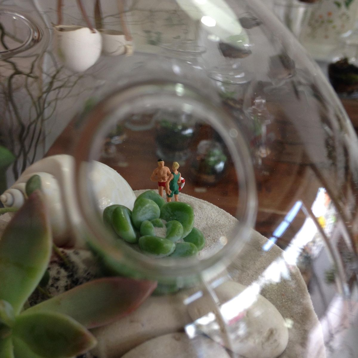 Desert (Succulent) Terrarium Workshop
