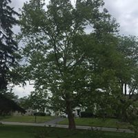 Become a Tree Steward with Green Columbus