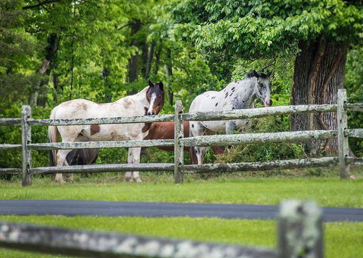 Horsemanship Workshop with Mark Deesing