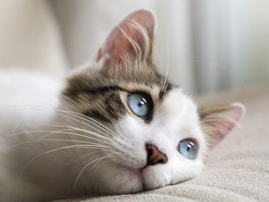 Low-Cost Spay/Neuter Transport for CATS at The Humane