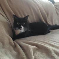Garden State Cat Club Adopt-A-Thon