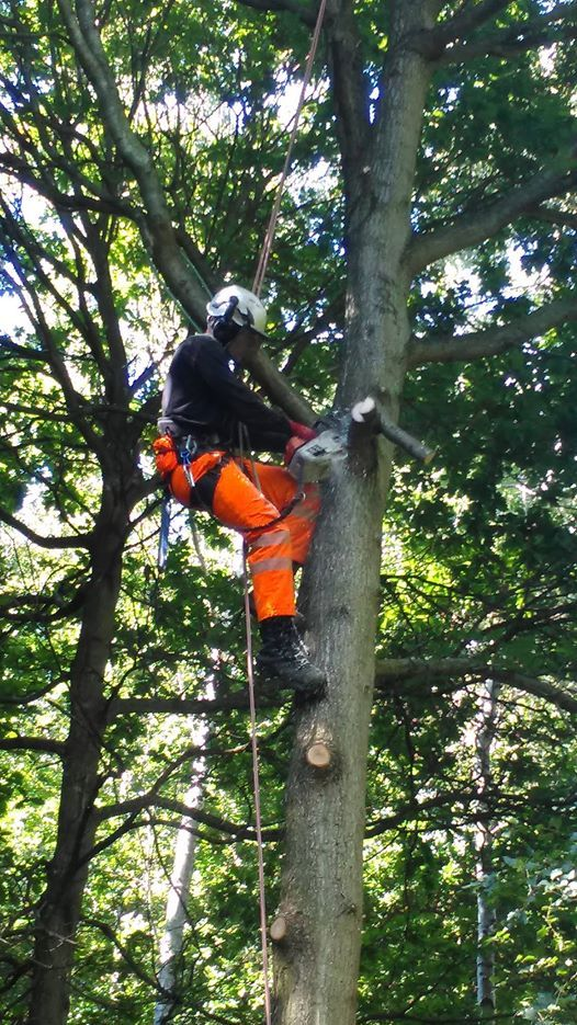NPTC Aerial Chainsaw using Free Fall Techniques (CS39)