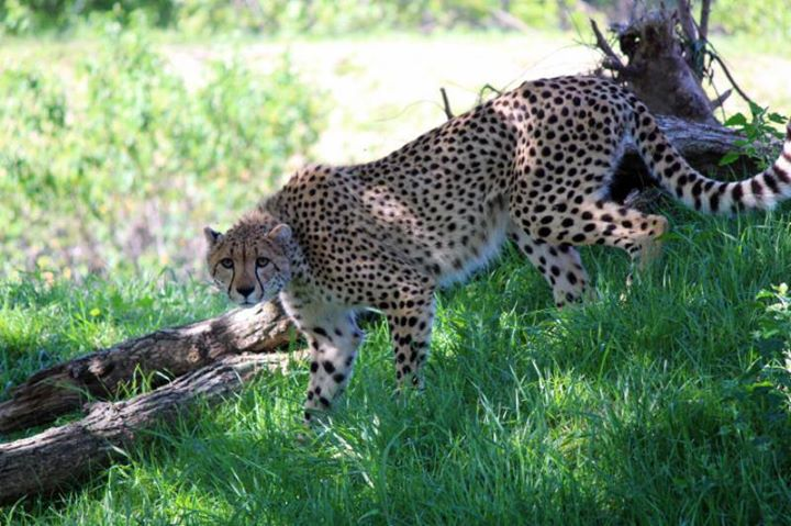 One Day Summer Camp Ages 9-11 Big Cats