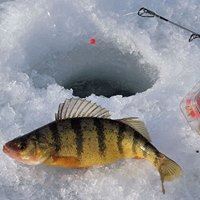 West Michigan Ice Fishing Show