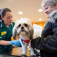 Barking Mad at K-Woodlands - Free Dog Chipping and Healthchecks