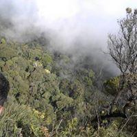 Pico da tijuca - Floresta da Tijuca