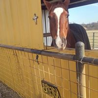 Doc Hayes Mobile Equine Massage And Rider Care