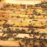 Workshop Die Aufgaben desder Bienenseuchensachverstndigen