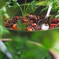 Food In Depth - Buckwheat