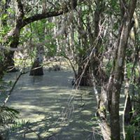 Corkscrew Swamp Sanctuary Swamp Mediation