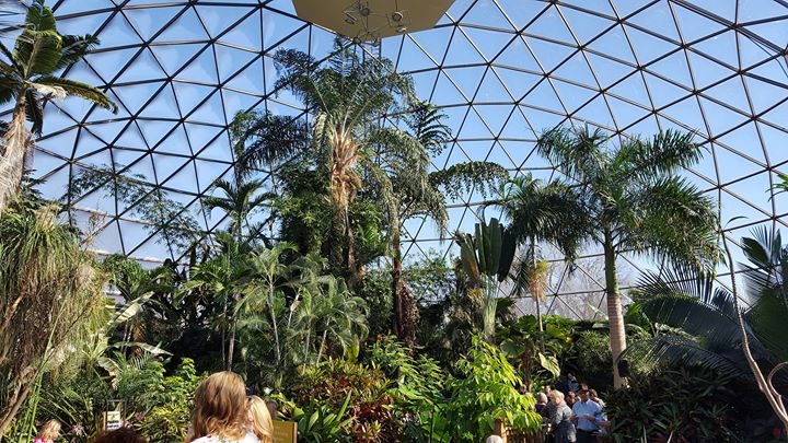 Sunday Funday Botanical Blues Under The Dome!
