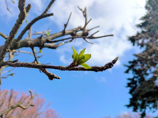Spring Day of Recollection