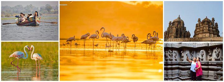 Flamingo Watching at Bhigwan (Day Trip)