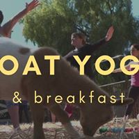 Goat Yoga &amp Breakfast (sold out)