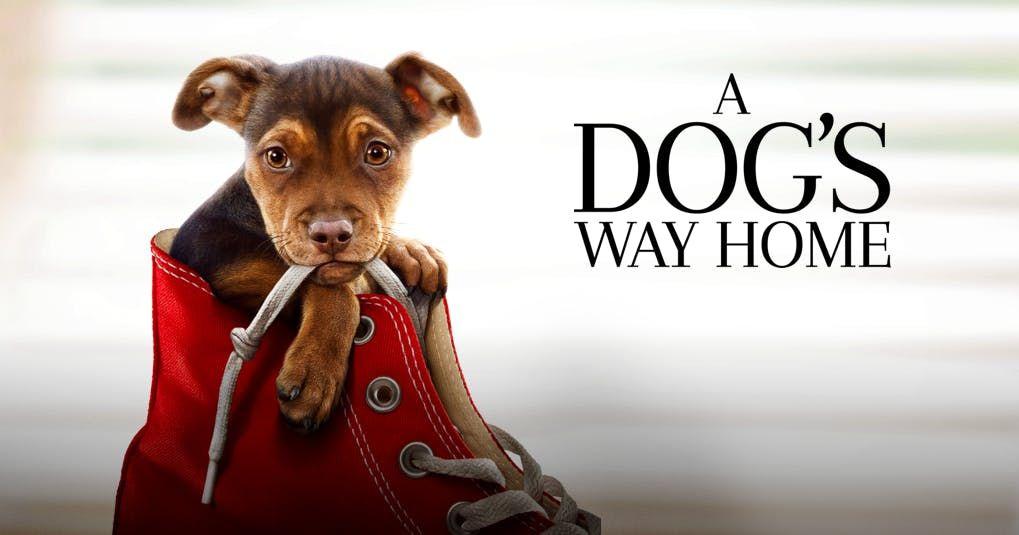 A Dogs Way Home - Block Screening Fundraiser (Cebu)