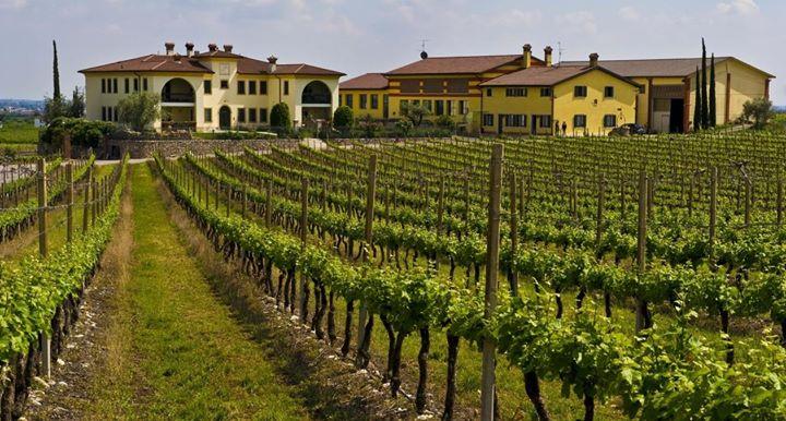 Afbeeldingsresultaat voor monte del fra wijnhuis italie