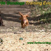 Gundog Training - Intermediate