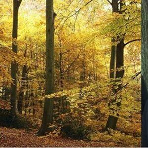 EWT Local Group - &quotWildlife &amp Conservation of Veteran Trees&quot