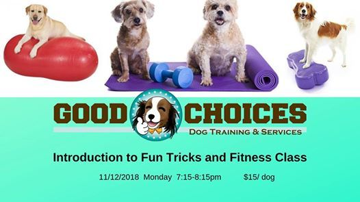 Introduction to Fun Tricks and Fitness Class