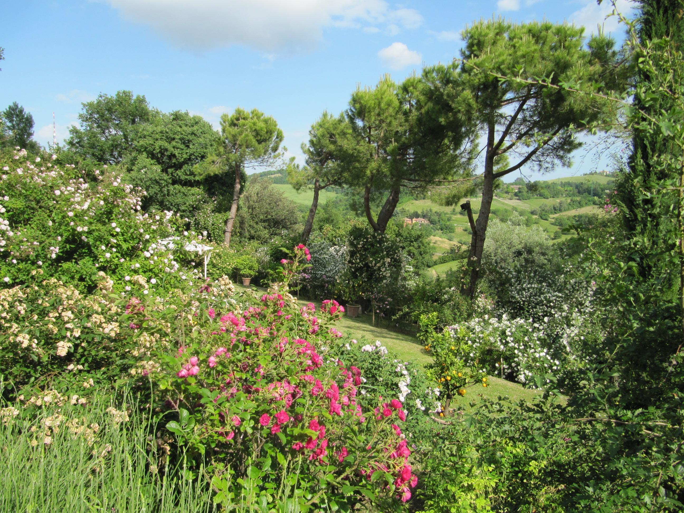 Giardino di rose del podere le vigne diverdeinverde at