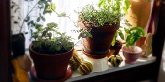 Learn How to Grow Your Own Indoor Herbs at an Urban Garden Tea Party
