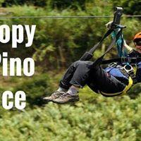 Canopy en Pino Dulce