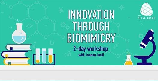 Innovation Through Biomimicry with Joanna Jurdi
