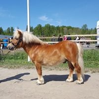 Hevosten Match Show Loviisassa