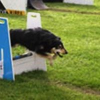Introduction to Flyball