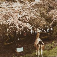 Mary's Farm & Sanctuary, home of Blossoming at The Farm
