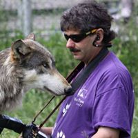 Wolf Behaviour &amp Management Why Dogs Arent Wolves