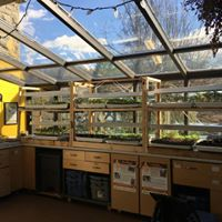 Veggie and Herb Seedling Sale