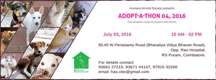 Adopt-a-thon 4, 2016 at 39, 40 W  Periasamy Road, Opp  Rao