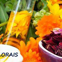 Workshop do Sistema Azas Florais em Terespolis