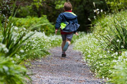 Nature Designs trail