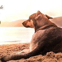 Curso de Reduccin de Estrs Canino Online