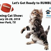 2018 Felines Football &amp Fun Cat Show