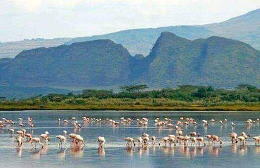 S. Warrior  Ugali Hill Hike-Lake Elementita 2700 9th March