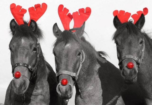 Image result for xmas horse pictures