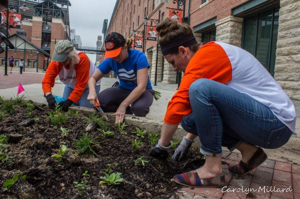 Volunteer at the Oriole Garden - July 23rd