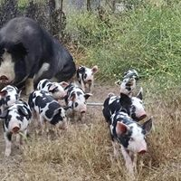 Pasture Based Livestock